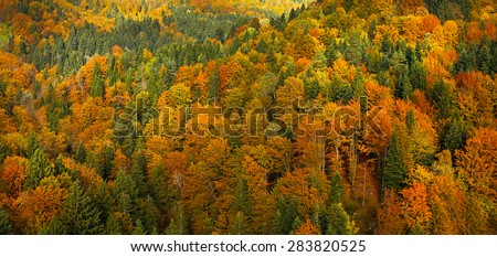 Lush, colorful autumn forest landscape, aerial view, textured background. Forestry, pristine nature, environment and sustainable industry concept.  - stock photo