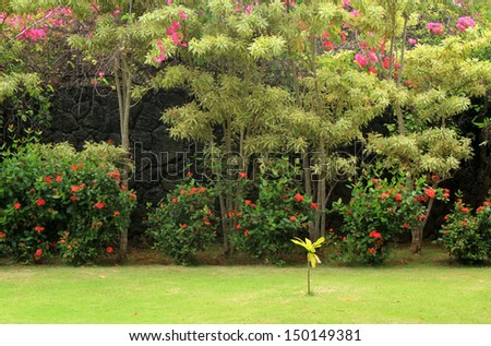 Lush, colorful garden landscape with garden and tropical trees