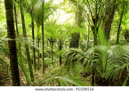 Lush foliage in tropical jungle - stock photo