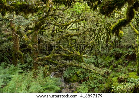Lush forest along the Kepler Track, one of the New Zealand Great Walks - stock photo