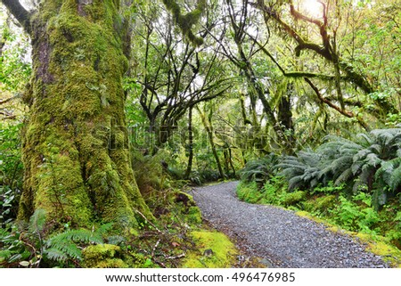 Lush Forests of Fiordland National Park, South Island, New Zealand