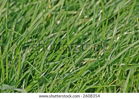 Lush Grass in English Meadow in Summer in Cheshire - stock photo