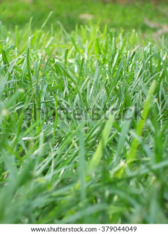 Lush Grass on a Summer Day - stock photo