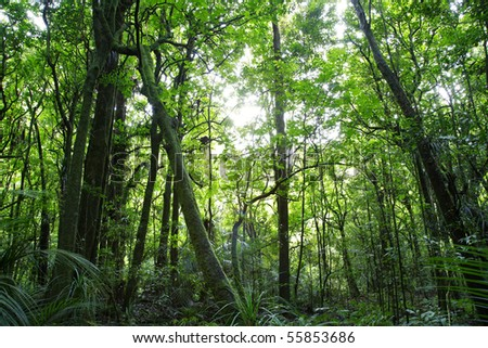 Lush green dense tropical forest