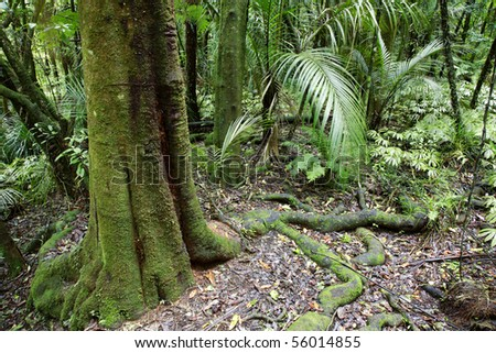 Lush green dense tropical forest - stock photo