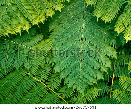 Lush green fern leaves - stock photo