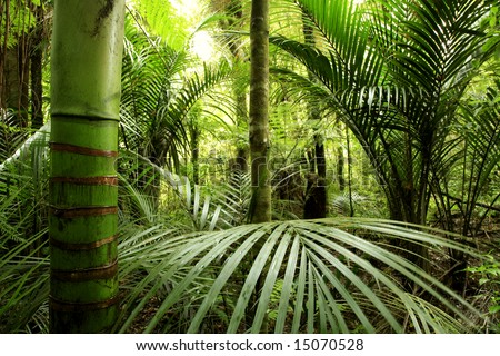 Lush green foliage in tropical forest - stock photo