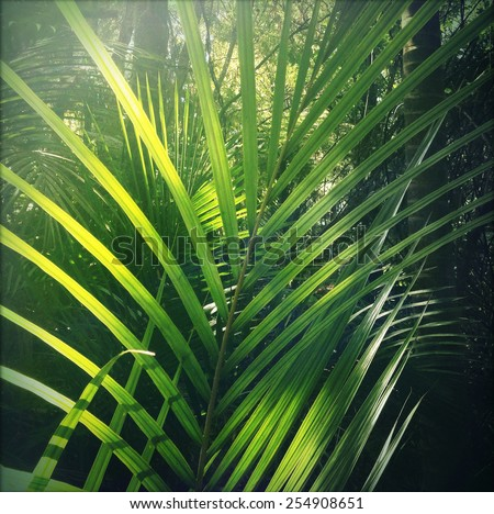 Lush green foliage in tropical jungle  - stock photo