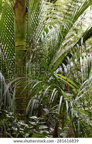 Lush green foliage in tropical jungle  - stock photo