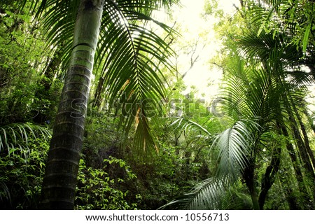 Lush green foliage in tropical rain forest - stock photo