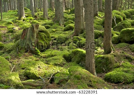 lush green forest - stock photo