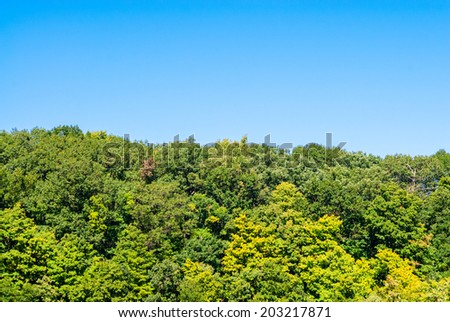 Lush green forest tree line against clear blue sky. - stock photo