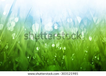 Lush green grass background with shining drops of dew in the morning - stock photo