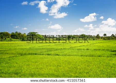 lush green grass field and blue sky