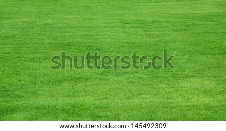 Lush green grass from a residential lawn - stock photo