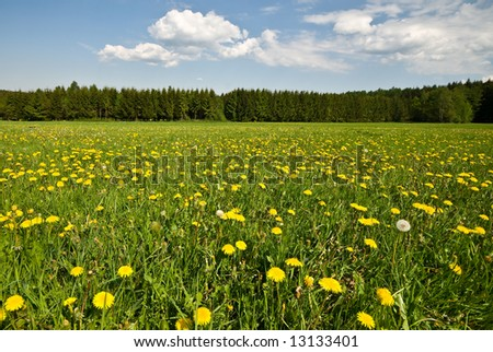 Lush green landscape and blue cloudy sky, with dandelions.