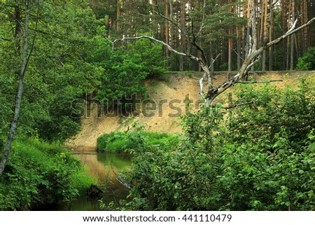 Lush green landscape with single dry tree between fresh summer greenery over the small quiet river. Reflection of plants in a water, sand steep over a river. Very beautiful nature - stock photo