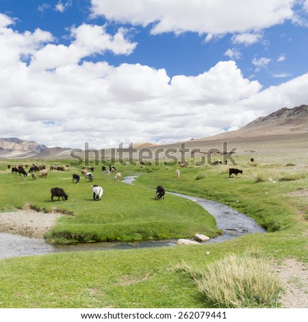 Lush green Mongolian landscape full of livestock surrounded by mountain hills and beautiful blue sky - stock photo