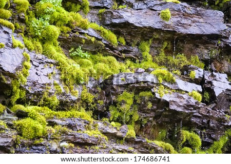 Lush green moss on a dripping  hillside in Glacier National Park, MT - stock photo