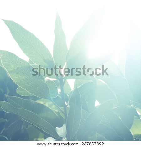 Lush green plant against bright sunlight. A beautiful abstract nature background. - stock photo