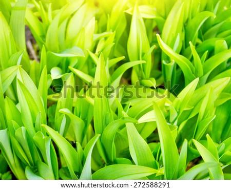 Lush green plants close up background  - stock photo