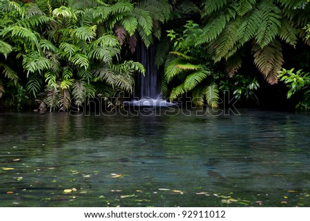 Lush, green rainforest and waterfall in the New Zealand forest - stock photo