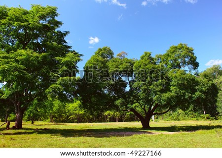 Lush green trees against a blue sky - stock photo
