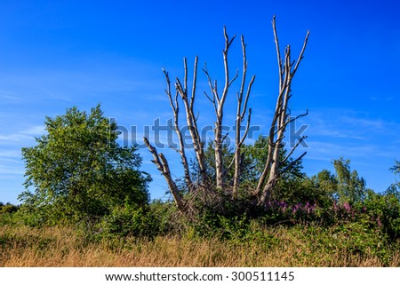 lush green trees and leafless tree in a park - stock photo