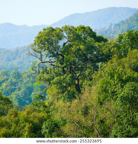 Lush green tropical forest - stock photo