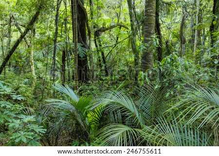 Lush Green Tropical Jungle  - stock photo