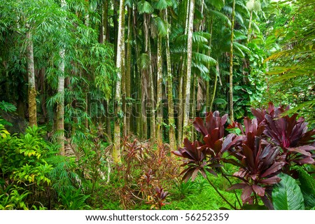 Lush green tropical rain forest in Hawaii - stock photo