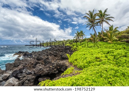 Lush green tropical vegetation on black lava at Waianapanapa state park on the island of Maui, Hawaii - stock photo