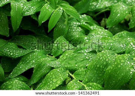 Lush green vegetation with rain droplets after a spring rain storm - stock photo