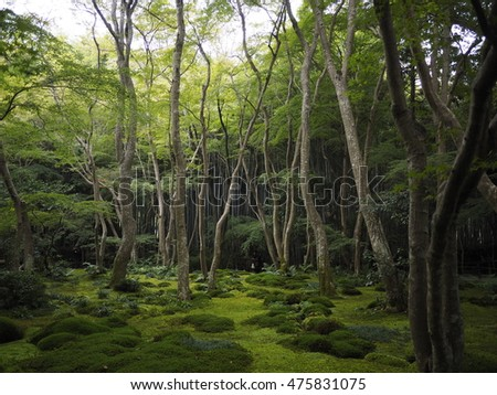lush greenery forest in the summer.