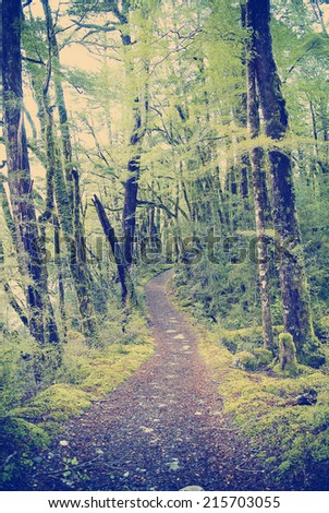 Lush jungle trail with dirt pathway with Instagram style filter - stock photo