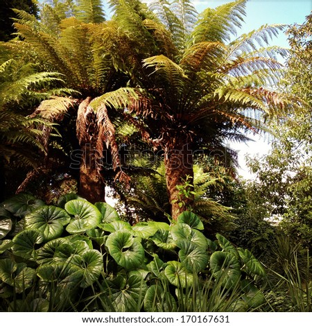 Lush leaves in tropical forest - stock photo