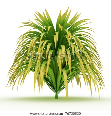 lush long leaves grass isolated over white - stock photo
