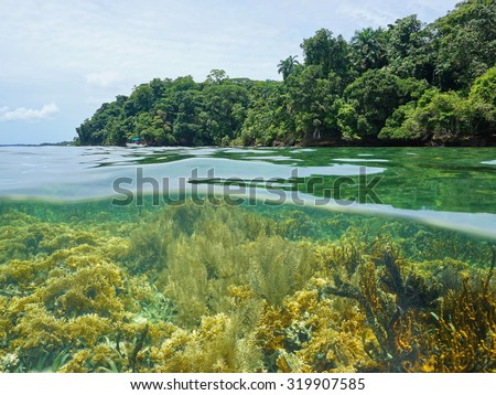 Lush nature half above and below water surface with tropical shore and a coral reef underwater, Caribbean sea, Central America - stock photo