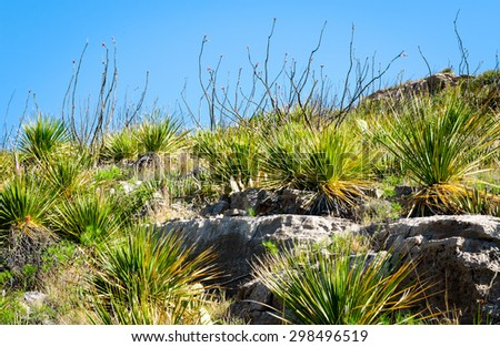 Lush Plants at Guadalupe Mountains National Park