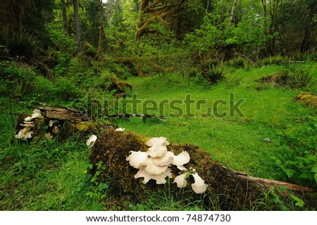 lush plants at hoh rain forest in olympic national park, washington, usa - stock photo