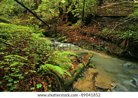 Lush rain forest stream with ferns and clovers - stock photo