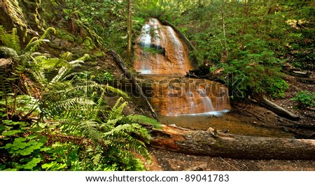 Lush rain forest waterfall and ferns: Golden Cascade Falls in Big Basin State Park, California - stock photo