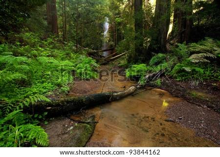 Lush rain forest waterfall: Berry Creek Falls in Big Basin State Park, California - stock photo