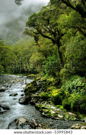 lush rainforest and river landscape in new zealand - stock photo