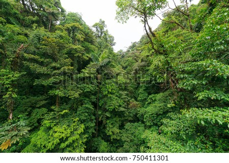Lush rainforest canopy view at La Fortuna Costa Rica & Canopy Stock Images Royalty-Free Images u0026 Vectors | Shutterstock
