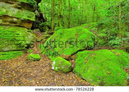 Lush Rainforest in the Budawang National Park - stock photo