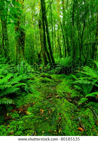 lush rainforest path - stock photo