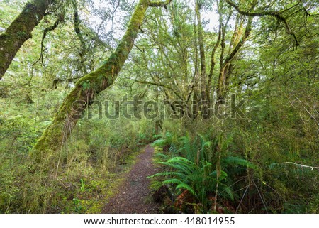 lush rainforest path, river flowing through lush temperate rainforest with different kinds of ferns and trees, New Zealand
