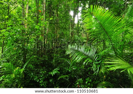 lush rainforest path , Thailand. - stock photo