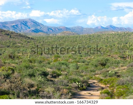 Lush section of the Sonoran desert landscape, Arizona - stock photo